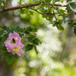 tavla blomma fluga svensk sommar